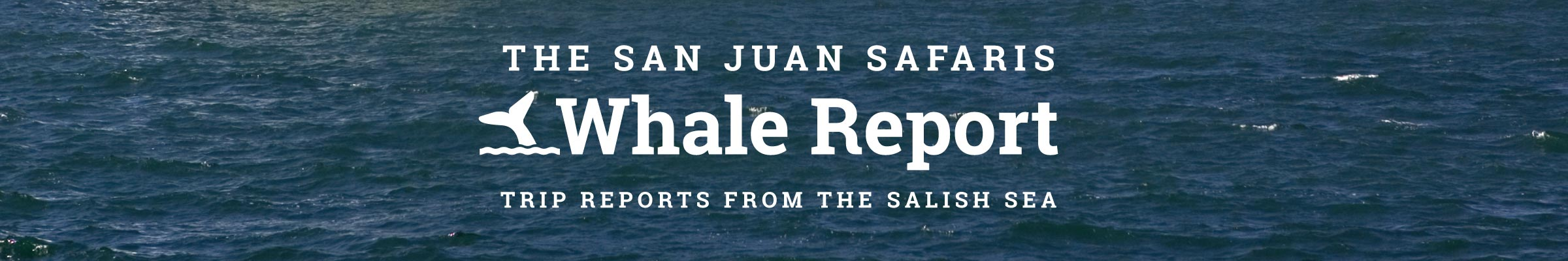Whale Report Blog